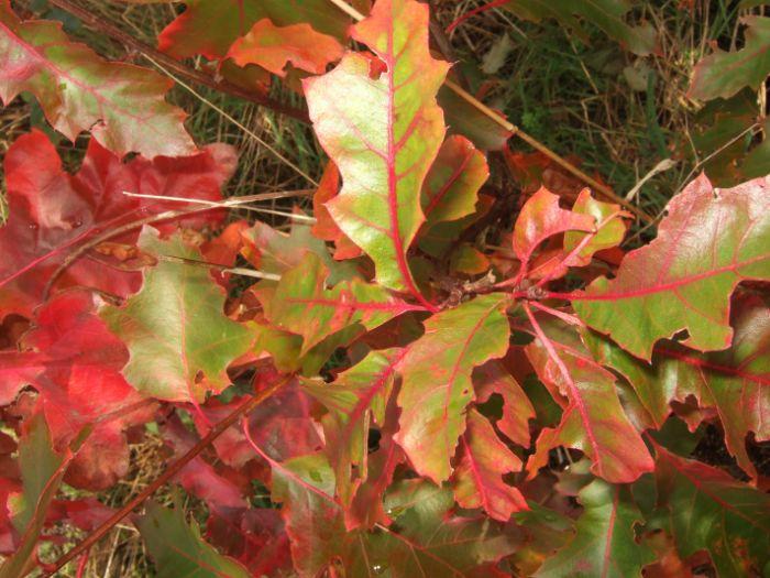clophill-in-autumn-17