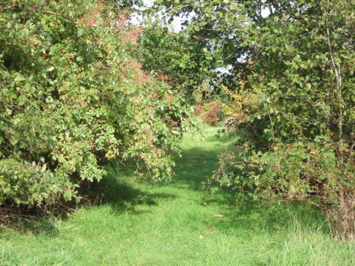 clophill-in-autumn-25