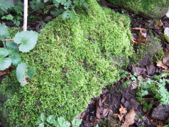 clophill-in-autumn-3