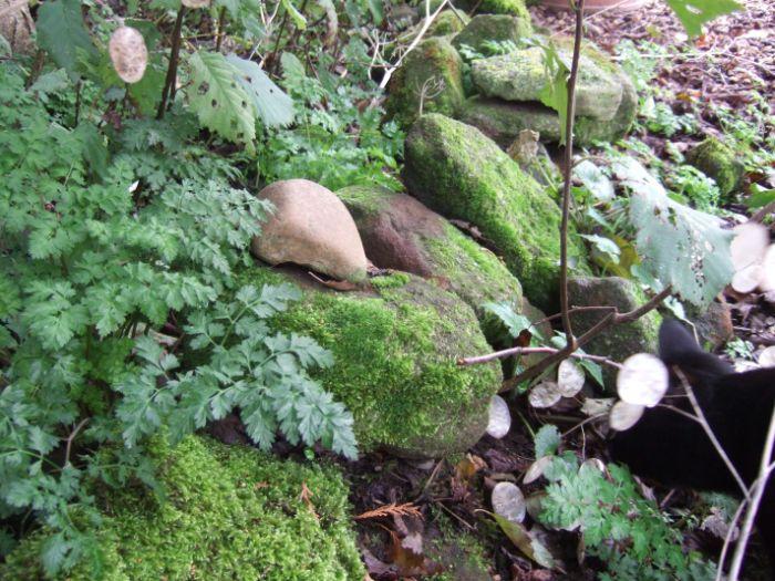 clophill-in-autumn-5