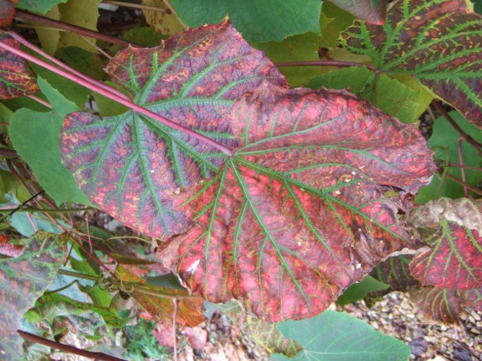 clophill-in-autumn-6