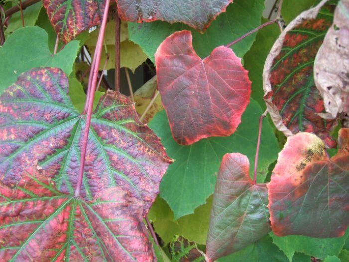 clophill-in-autumn-7