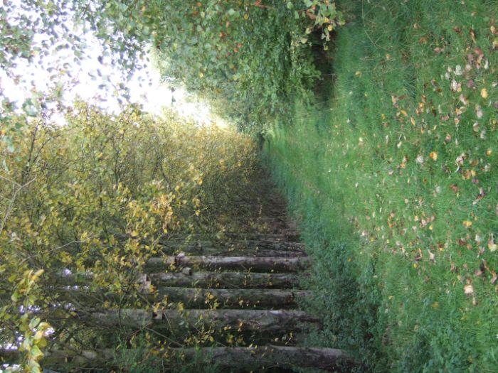 clophill-in-autumn-78