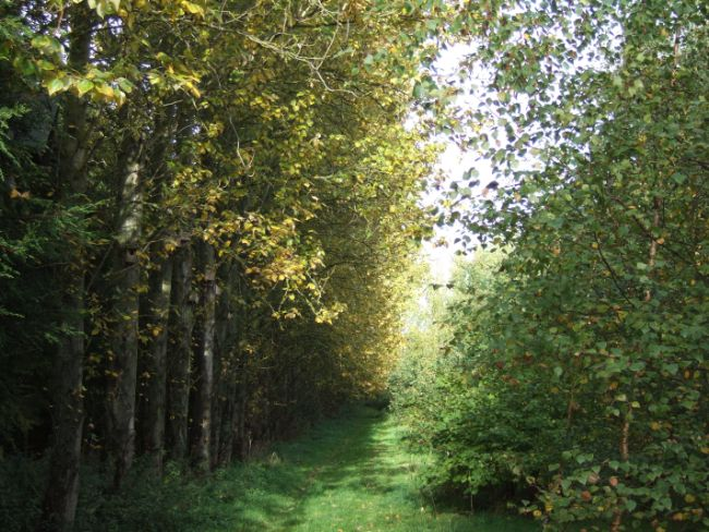 woodland-area-11