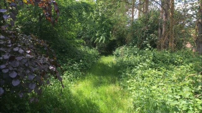 woodland-area-2