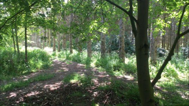 woodland-area-3