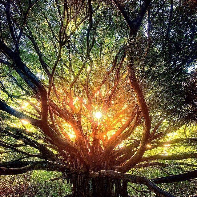 ruth tree