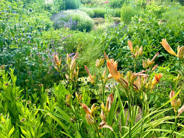 Clophill Centre Garden 3